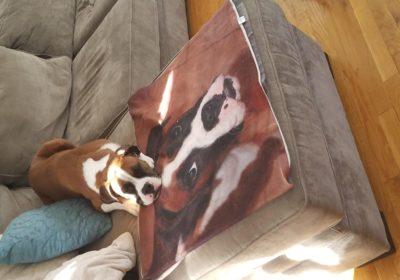 #hercules #dogtrainingbrooklyn #barkbustersdogtrainer
